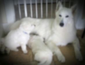 Summer and pups 4 weeks.jpg