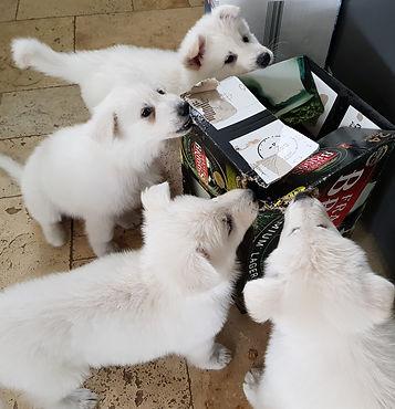 beer puppies.jpg
