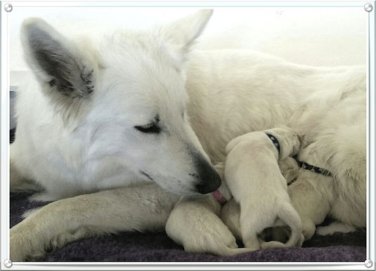 Summer and pups the day they were born.j