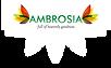 Ambrosia-Nuts-logo.png