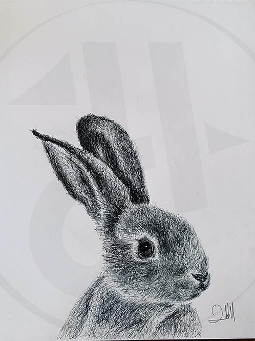Rupee the Rabbit