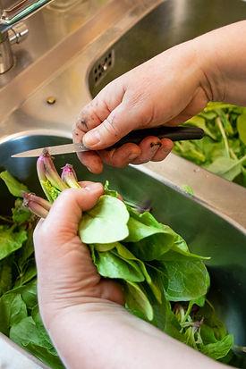 Kenner-Küche-Spinat-putzen.jpg