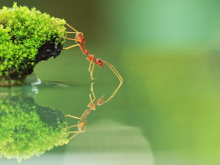 The Ant Goes to Heaven
