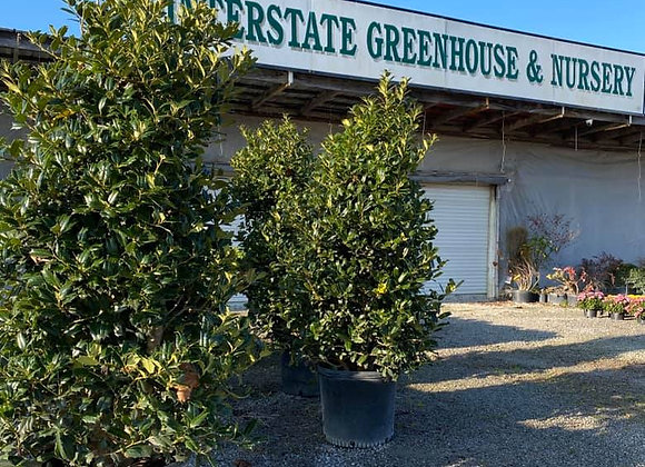 Interstate Greenhouse and Nursery, 3708 KY-227, Carrollton
