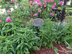 Shorewood Hills Garden Club