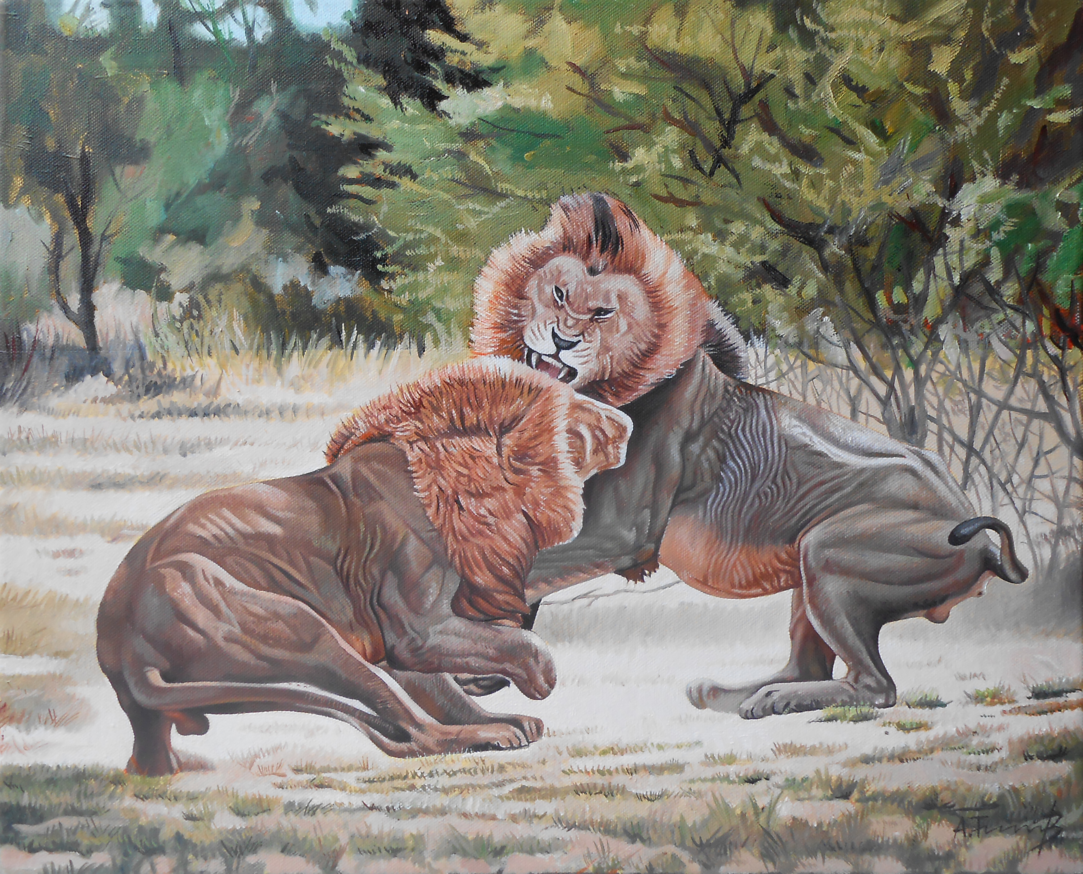 Lions fighting 4