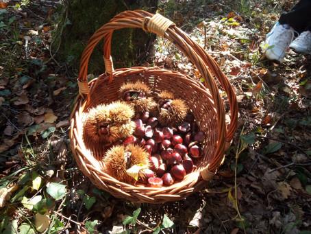 Jesen u šumi - izvanučionička nastava