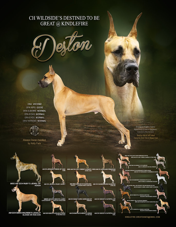 CH Deston Stud Ad.jpg