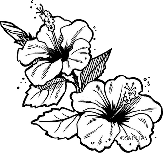 Fleur d'hibiscus_ss fond.tif