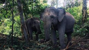 Volunteering in Cambodia - Phnom Penh, Siem Reap, Elephant Sanctuary and Angkor Watt