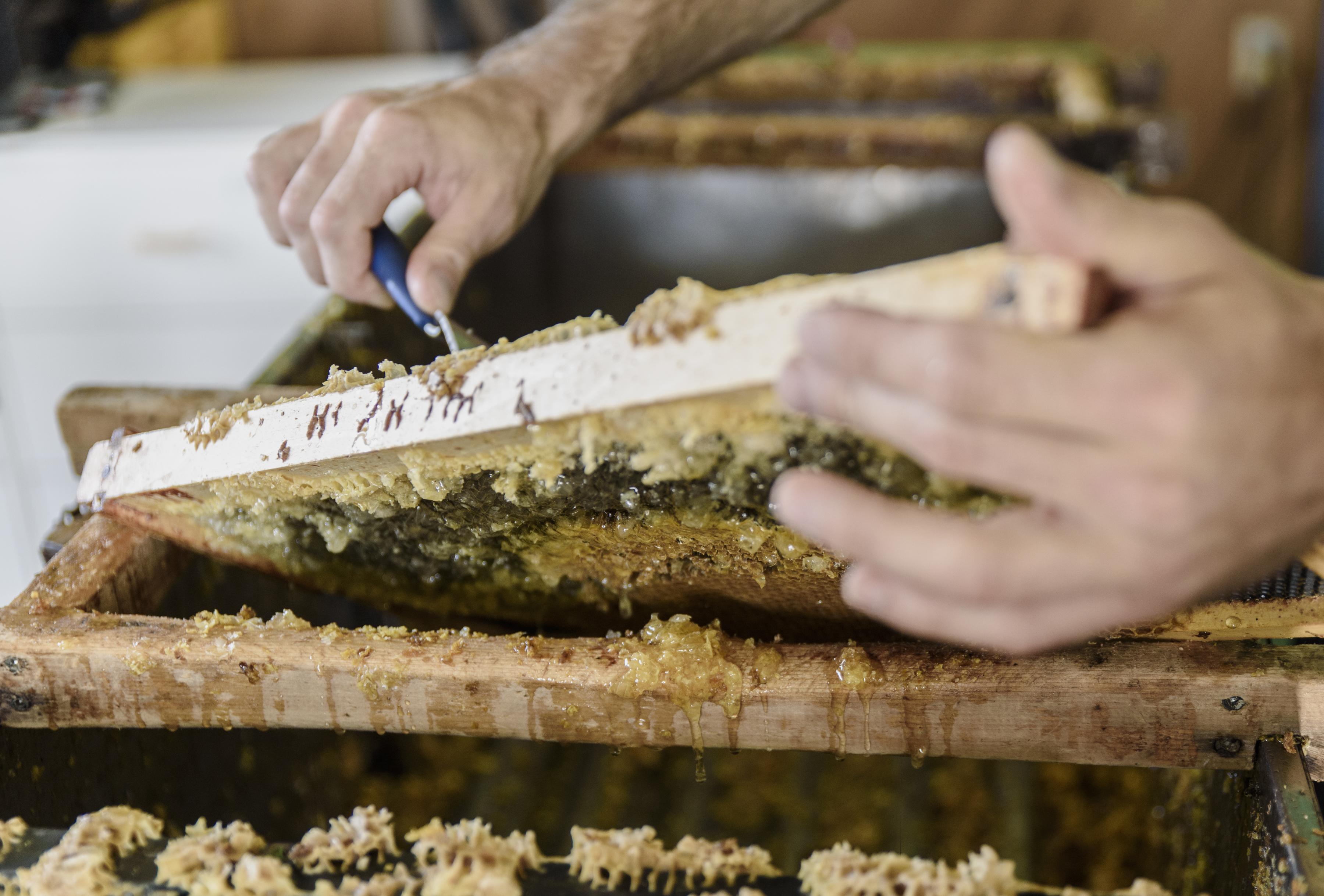 115 des Embruns - Miel Mosaique