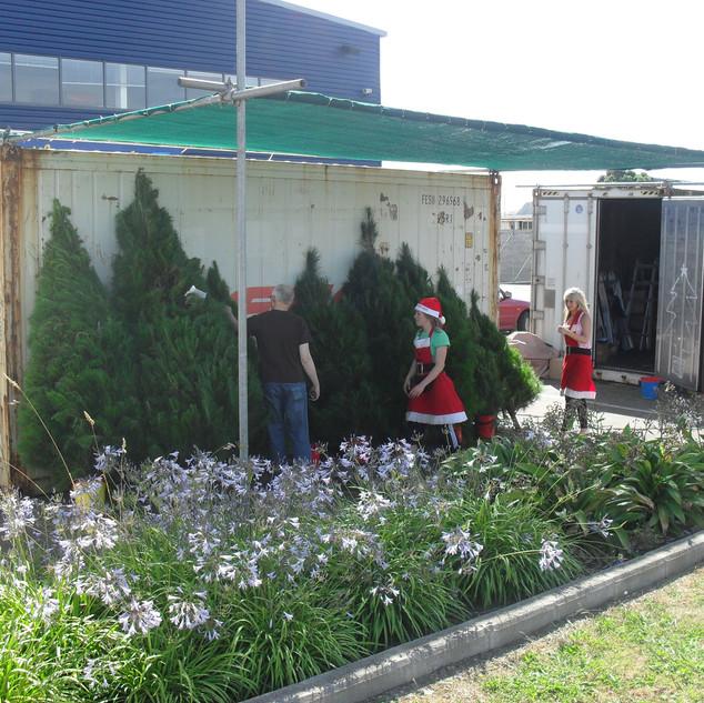 Tree sites , Christmas hampers 028.jpg
