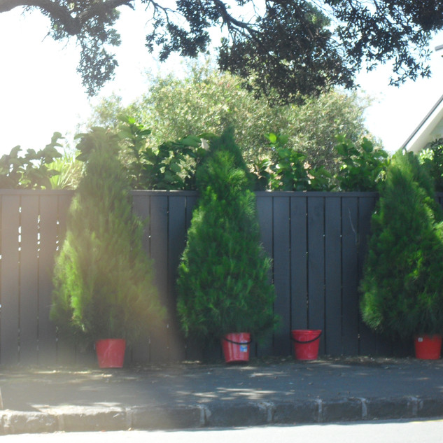 Tree sites , Christmas hampers 016.jpg