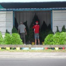 Tree sites , Christmas hampers 031.jpg