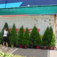 Tree sites , Christmas hampers 001.jpg