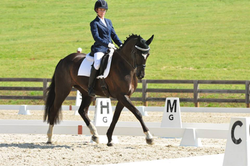 taylordressage
