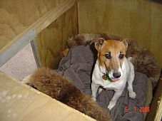 dog-in-kennel.jpg