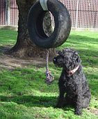 tyre-on-tree.jpg