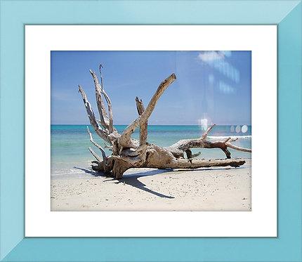 Beachside Bleaching