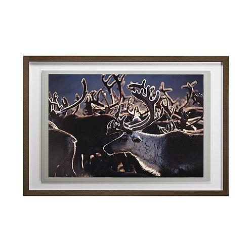 Reindeer (Herd in the Sun) Wall Art