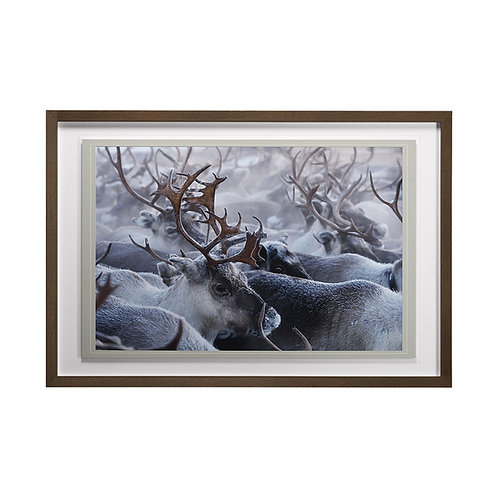 Reindeer (A Pause in the Herd) Wall Art