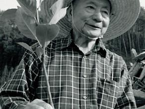 Biodiversité : La fôret Miyawaki