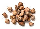 marula-nut2.jpg