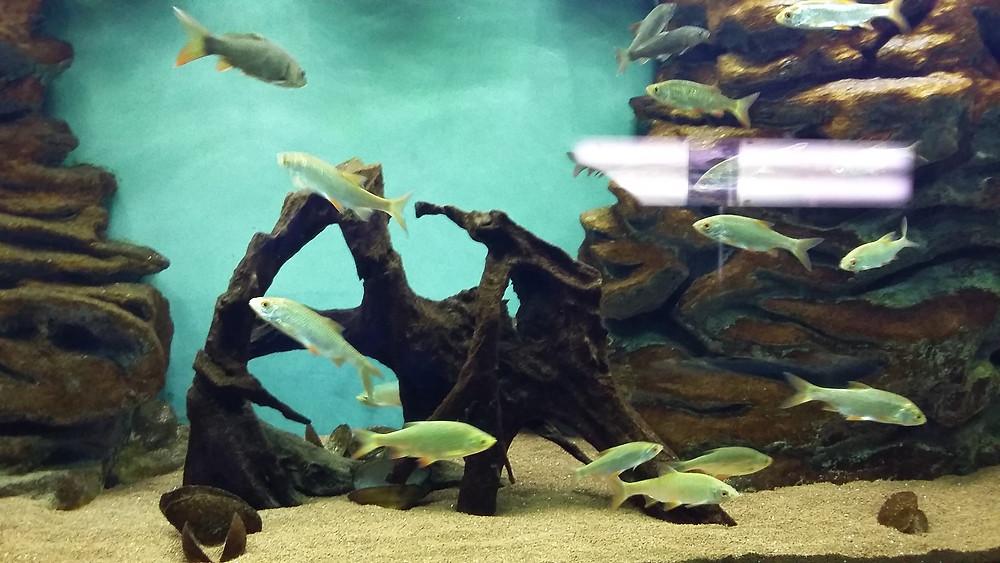 aquarium annecy castle