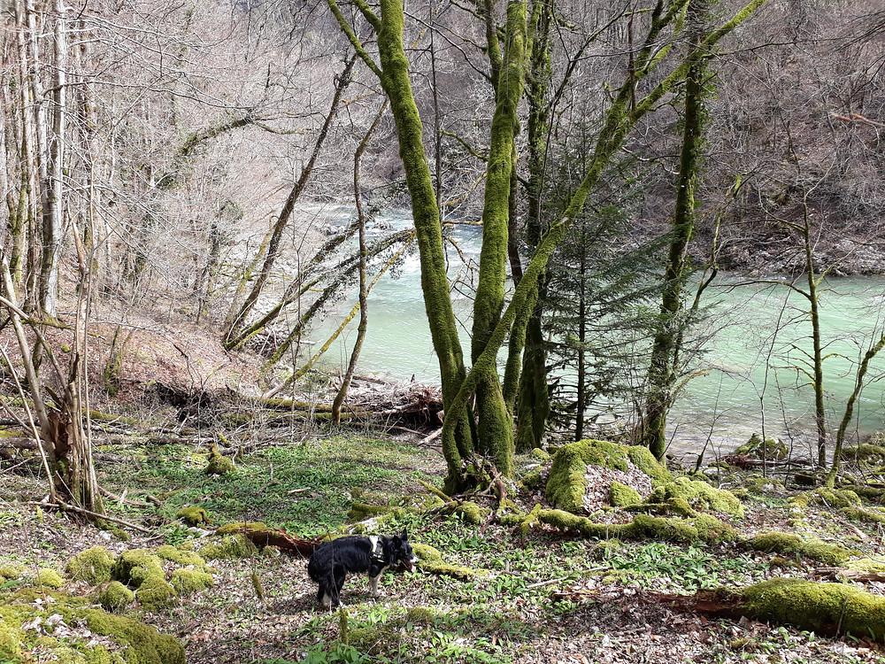 chéran riviere bauges