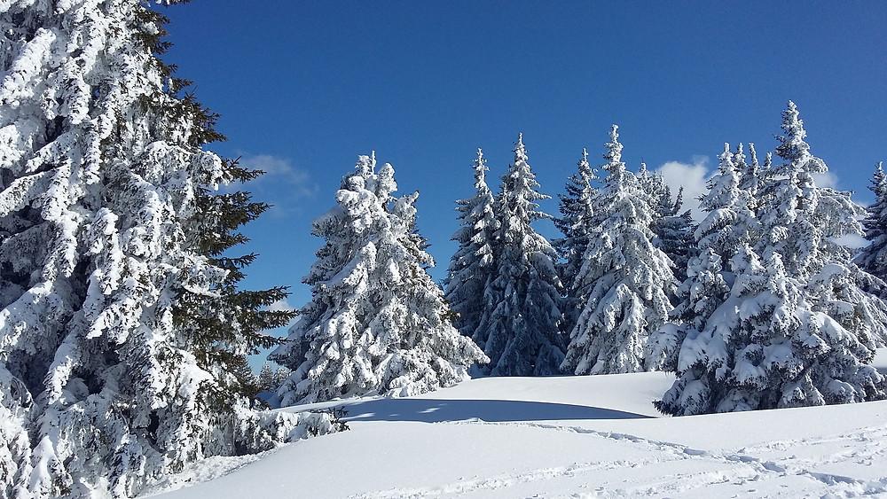 winter trees in Semnoz
