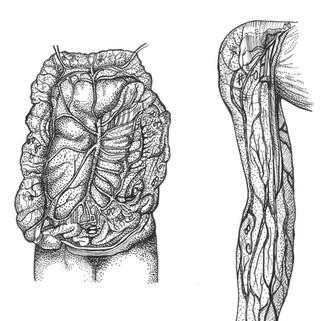 Anatomy III