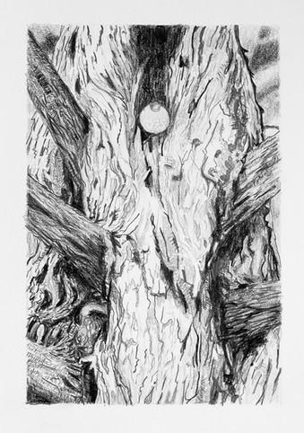 Tree Portrait #075