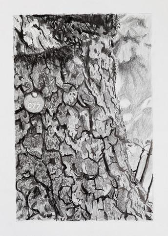 Tree Portrait #077