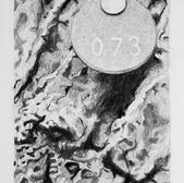 Tree Portait 73.jpg