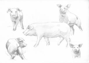 Barnyard Pigs