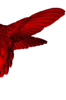 Hummingbird Red wing L.png
