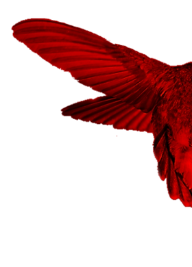 Hummingbird Red wing R.png