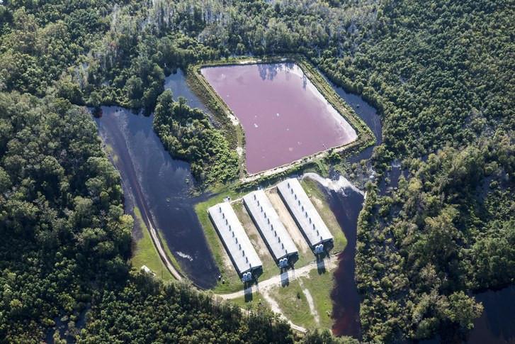 manure lagoon at CAFO