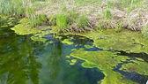MEA Algae 2.jpg