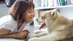 Article: Pets and Family Violence