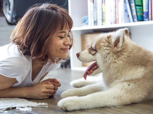 COVID-19: ¿En casa con tus animales?