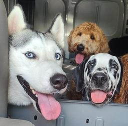 dogsincar.jpg