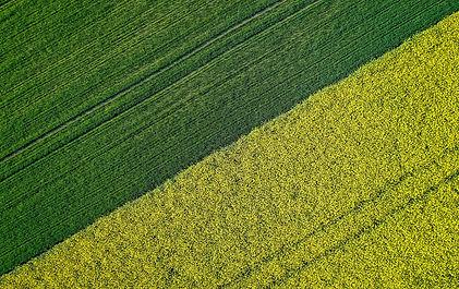 beautiful-agricultural-half-green-half-y