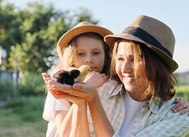 woman-holding-small-newborn-baby-chicks-