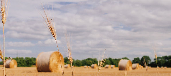 graphicstock-bales-of-hay-in-a-wheat-fie