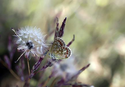 butterfly-4848340.jpg