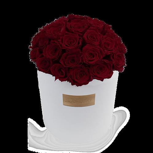 wine red eternity roses - huge white round box