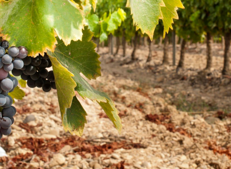 ¿ Cómo ser eficientes con el riego en contextos de sequía ?