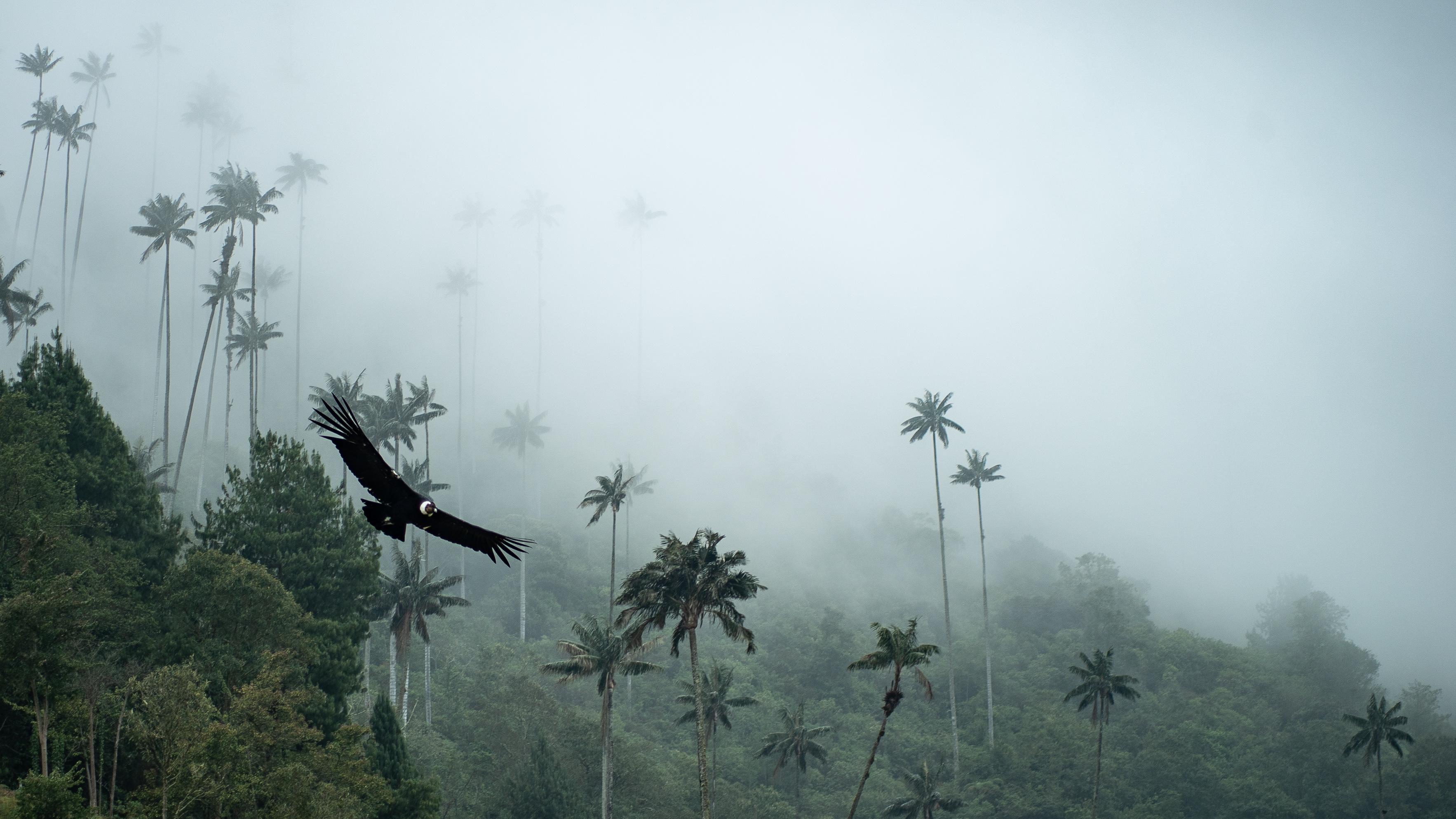Valle de Cocora, Kolumbien