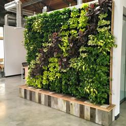 Вертикальное озеленение, Фитостена, Живые растения Автополив  Санкт-Петербург Спб. Зеленая стена  ЭКО дизайн